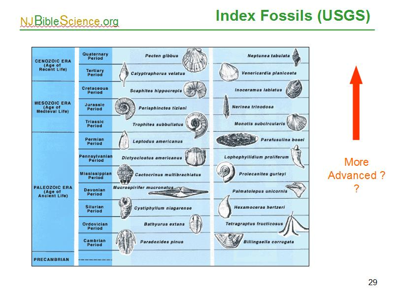 fossil notes Few organisms with soft parts are preserved (jellyfish, insects and many plants) • no organisms that decay before burial • shallow marine organisms are most likely to be buried rapidly • note: – we have about 250,000 fossil species – today around 4,000,000 species exist.